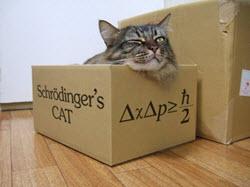 Vergeet de regels box boek schrijven schrijftips singularity miriam wesselink